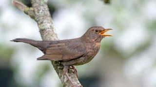 Vogel auf einem Ast (Foto: Colourbox)
